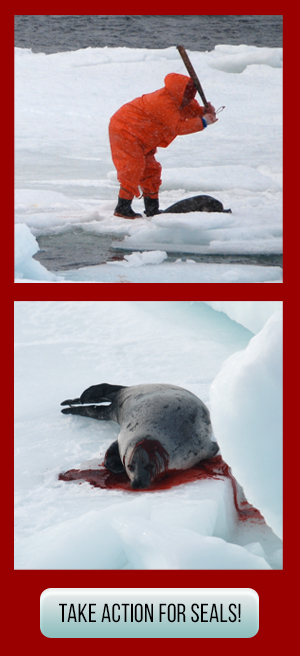 Take action for seals!