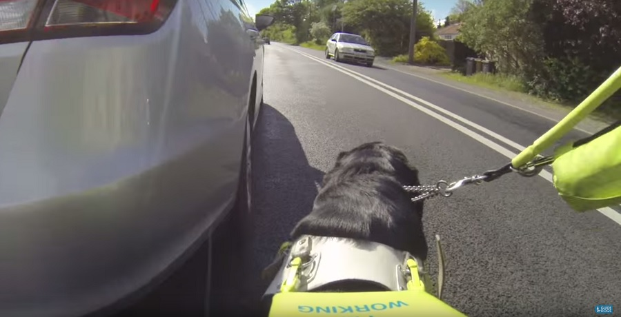 An image from the perspective of a guide dog owner, who is being led out onto a main road by their guide dog to go around a pavement parked car.