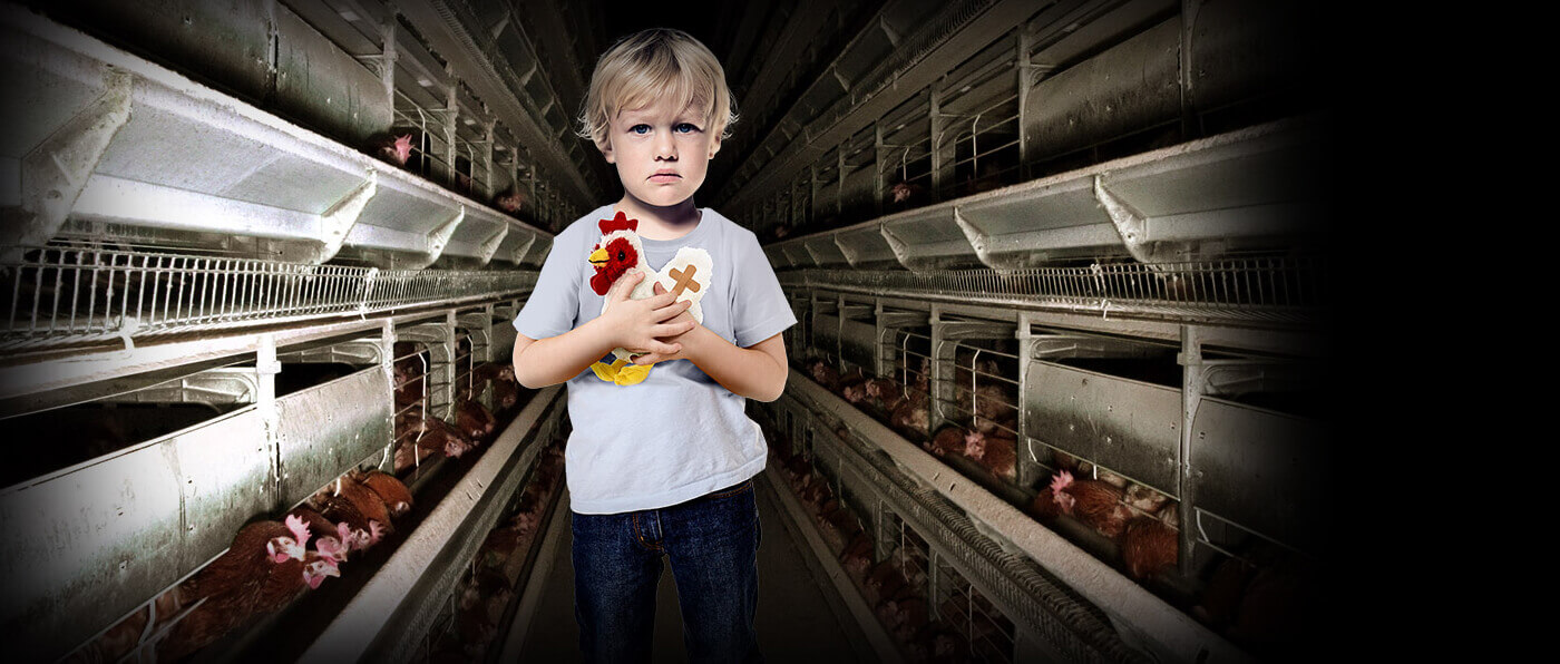 boy holding stuffed toy chicken standing in corridor of factory farm of caged hens