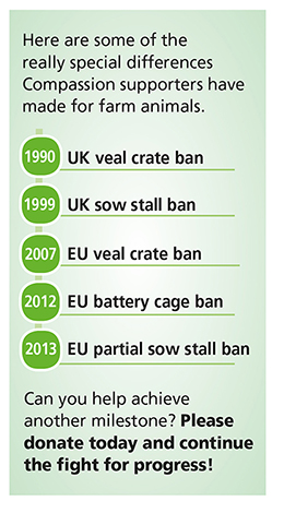 Animal Welfare Achievements Info Graphic