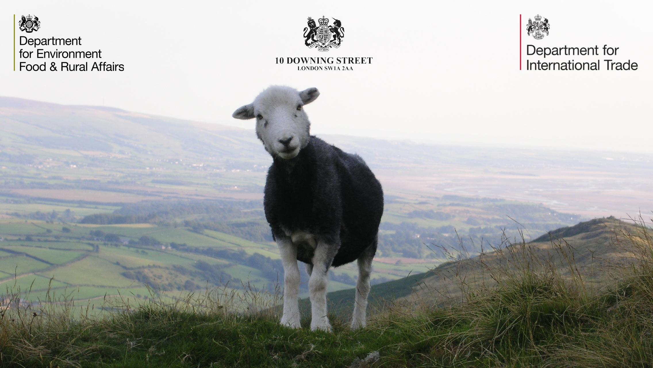 Sheep on a hill with gov logos