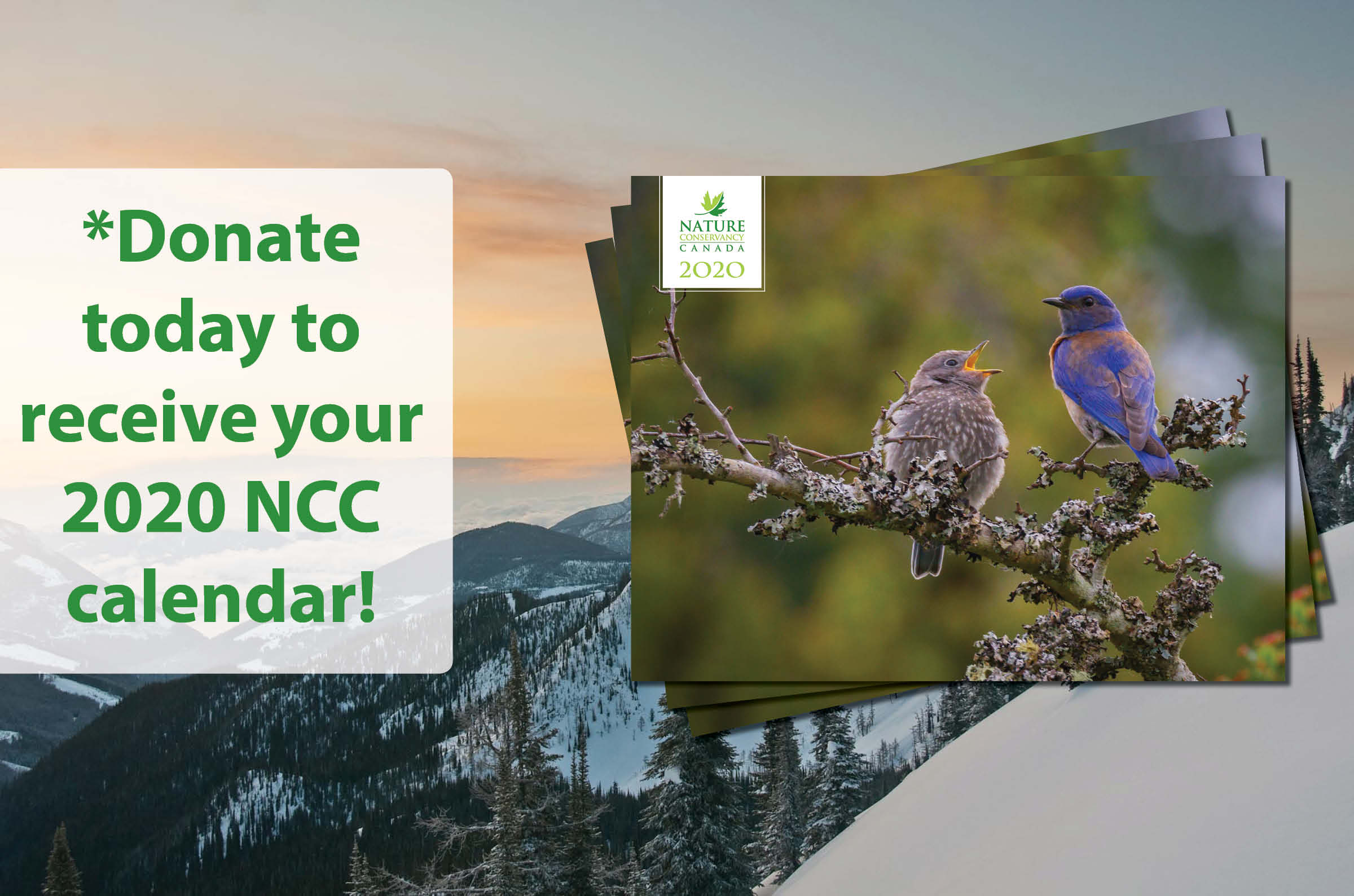 Donate $40 or more to receive your 2020 NCC calendar