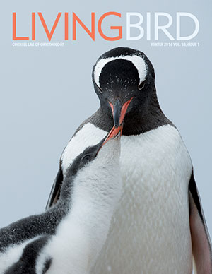 Living Bird Magazine, an award winning magazine
