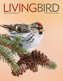 Living Bird Magazine