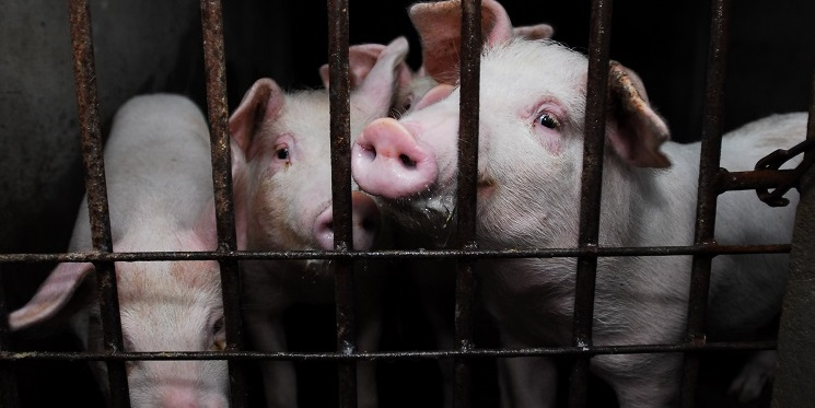 Help end factory farming