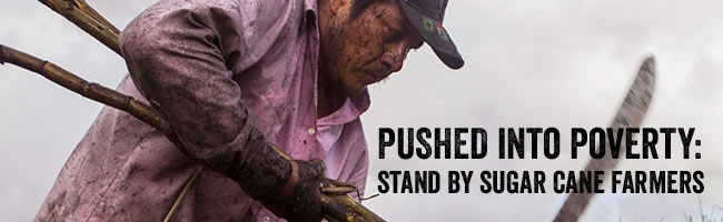 Pushed into poverty:stand by sugar farmers