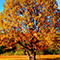 Do you know your province's official tree?