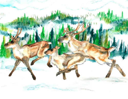 Boreal caribou in wintry landscape