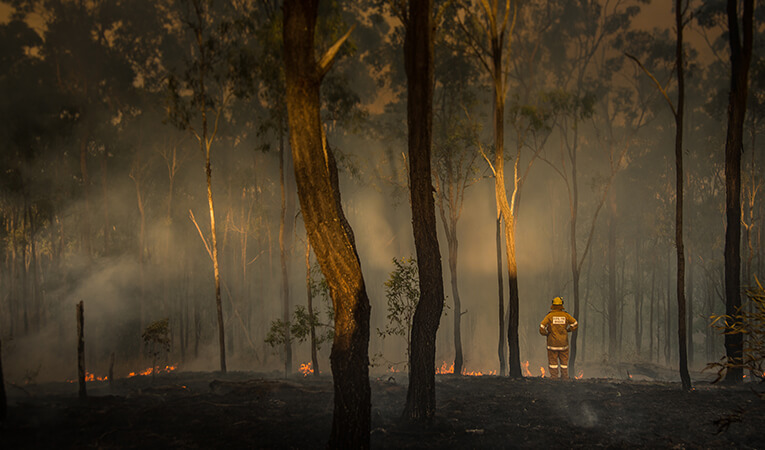 Firefighter standing in front of burnt bushland.