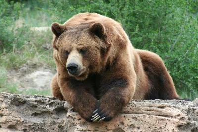 Grizzly_Bear__3_BC.jpg