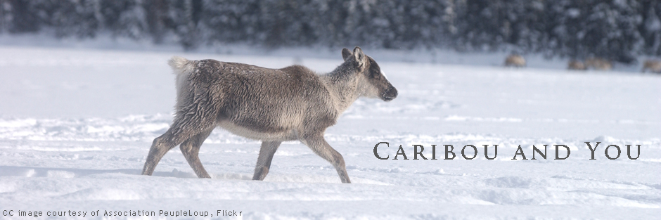 NTL_CPAWS_caribou_header_Dec2017.jpg