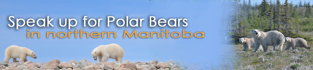 Polar Bear online action banner copy.jpg