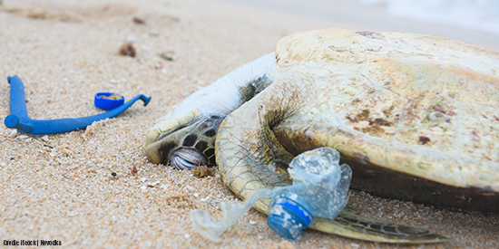 Dead sea turtle on beach surrounded by plastic pollution.