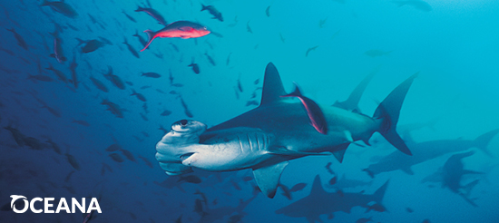 Add Your Name: Ban the Sale of Shark Fins in the U.S.