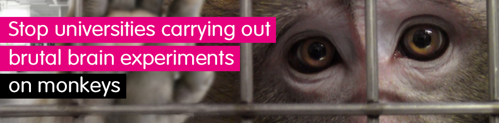 Stop brain experiments on monkeys
