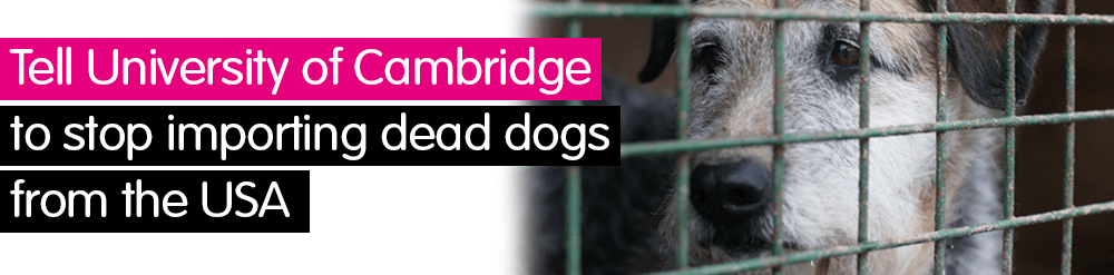 Tell University of Cambridge to stop importing dead dogs from the USA