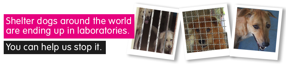 Shelter dogs around the world are ending up in laboratories. You can help them.