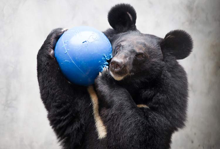 Bear holding blue ball
