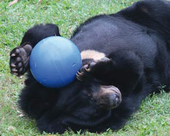 Bear Treat Ball