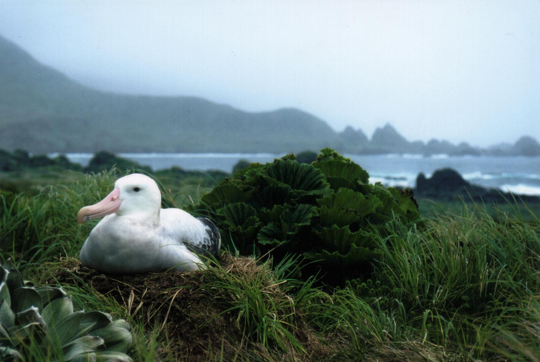Save Threatened Albatross
