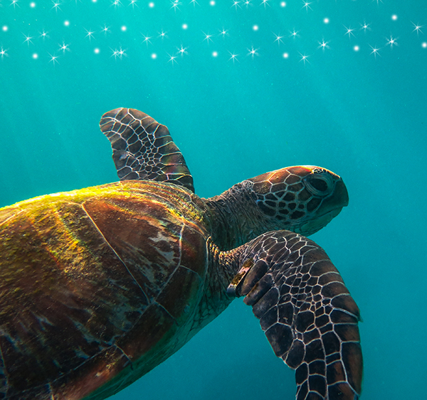 Support Turtle Conservation Efforts in Bali