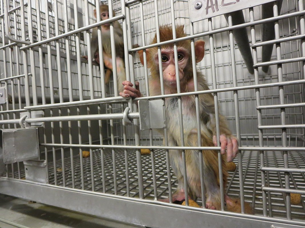 Young-Monkeys-in-a-Barren-Cage2.jpg