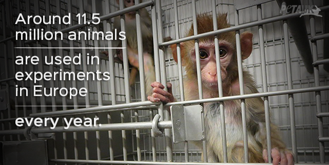 Approximately 11.5 million animals continue to be used in experiments in Europe every year.