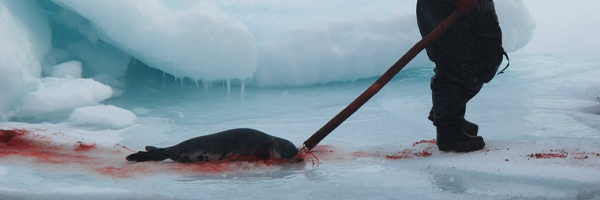 The air reeks of seals' blood and death …