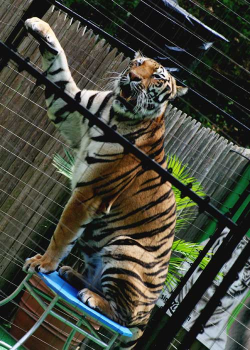 Speak out against wild-animal circuses