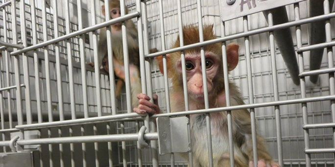 Medical charities are being forced to support tests on animals