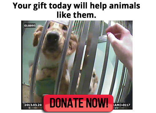Will you help birds and other animals?