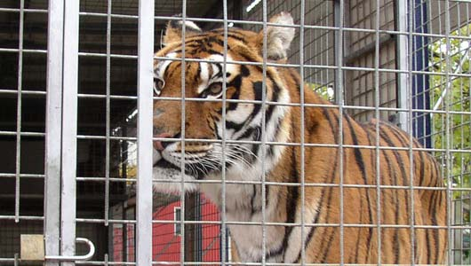 Take action for circus animals